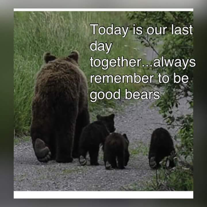 We can't #StopTheBearHunt, but can social shame those involved, including Gov. Scott, Liesa Priddy of FWC https://t.co/9U2x6Zi7Zs