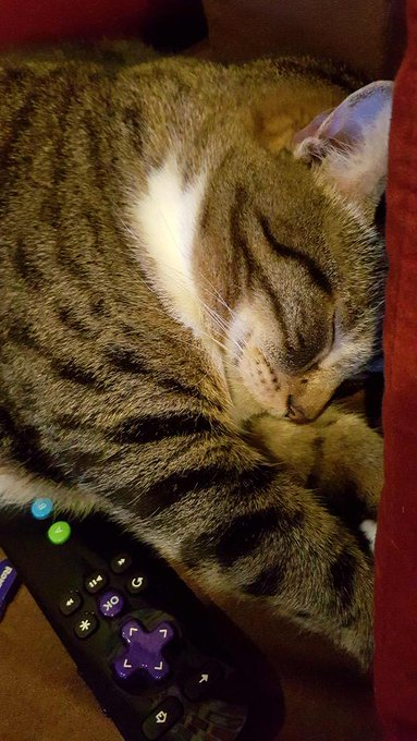 Awe the rain makes him sleepy... well everything makes him sleepy. https://t.co/6jj4MlLW55