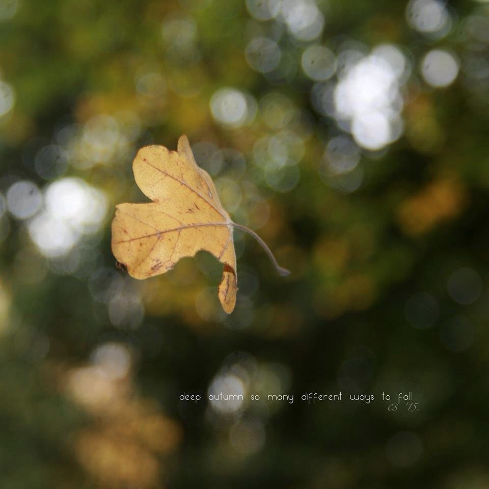 #monostitch #micropoetry #tanshi  deep autumn so many different ways to fall https://t.co/mpS6b70UY9