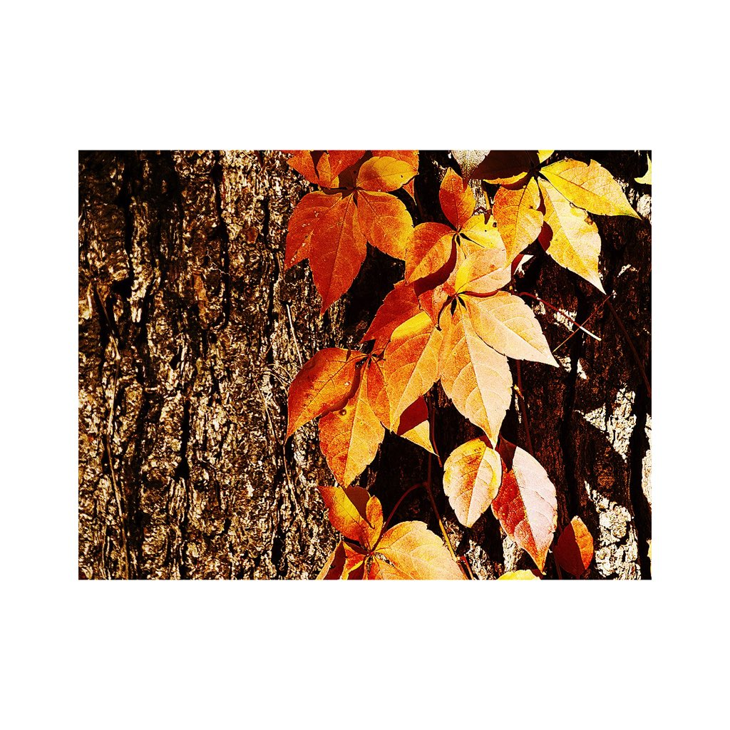'The trees are about to show us how lovely it is to let things go' (c) unknown  #Fall