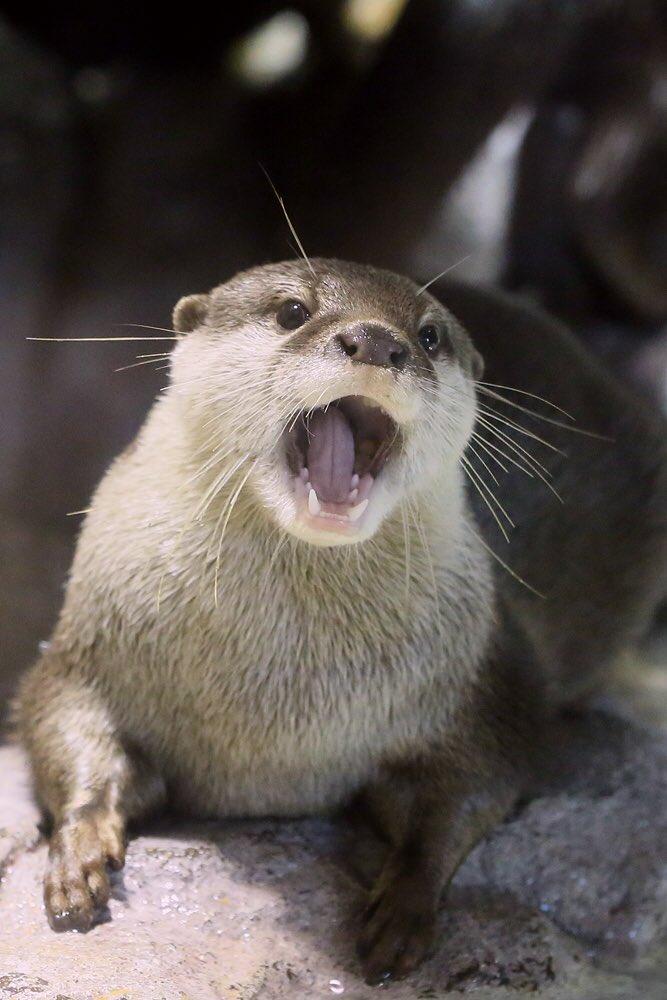 アラタ君、4歳のお誕生日おめでとう〜♪ #宮島水族館 #コツメカワウソ #アラタ pic.twitter.com/1kPytePTkV