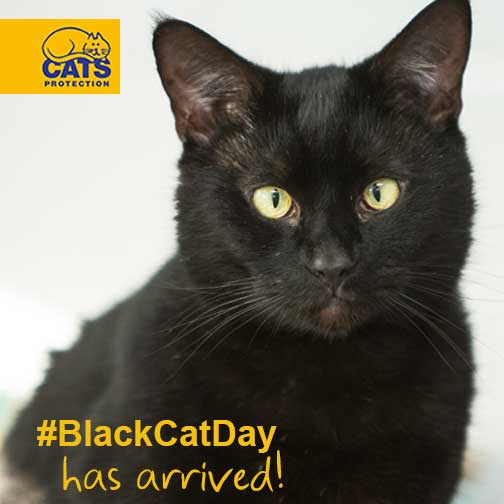 Hooray! It's National #BlackCatDay! Spread the word by tweeting us your black cat pics – we'll RT our favourites