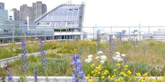 How #green roofs in central #London came about >> https://t.co/4zRHbTmuvk https://t.co/32jduSrIbV