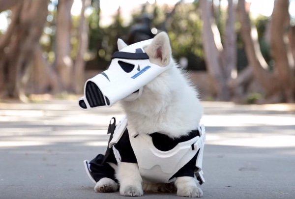 RT #HambySanDiego:  http:// j.mp/1zAfMow     RT NerdApproved: Winston The White Corgi Is The Cutest Stormtrooper Ev…pic.twitter.com/j9KK1MPxtM