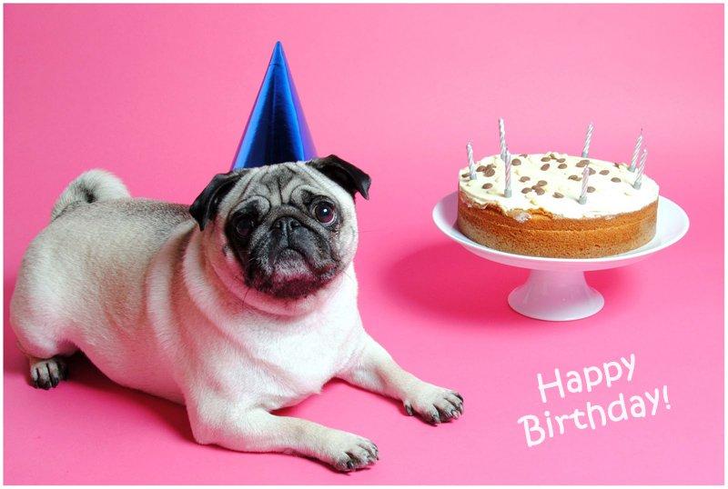 С днем рождения открытка с мопсом, открытки день рождения