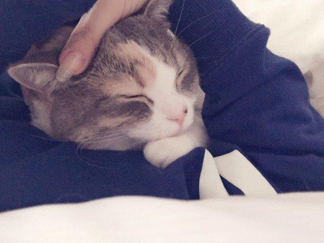 今朝のにゃー猫抱き枕(・∀・)#にゃーちゃん pic.twitter.com/bDCAS9AAB9