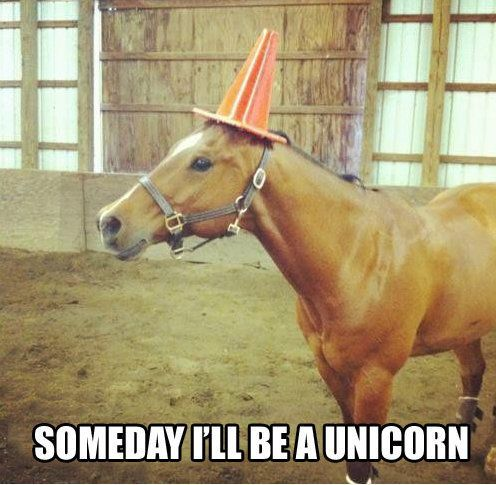 I am the #unicorn you are looking for.... #sydstart #jedimindtrick #fancydress ideas. https://t.co/Lus5rSpkJI