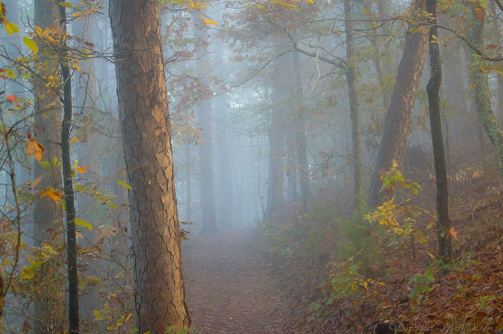 Golden Light and Aqua #Fog in the #Autumn #Forest #Nature OptOutside#Photography #Hiking