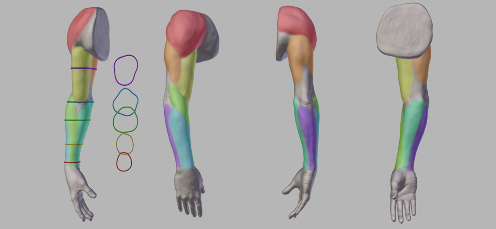 New post: Anatomy of the Arm (download included) https://t.co/vhtX5OAZX6 https://t.co/ylAYj2jJ7M