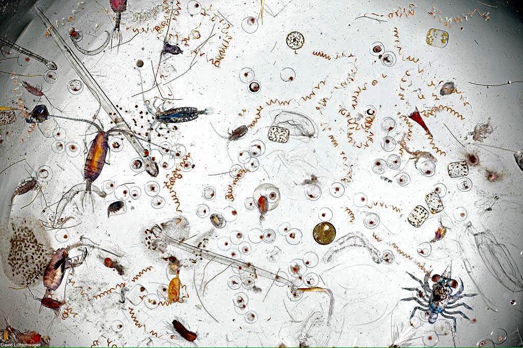 ひとすくいの海水の中には、こんなに多様な生命が。25倍の拡大画像。(再掲載) pic.twitter.com/8NUDbfoF5T