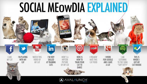 Of course a reminder on #NationalCatDay of this awesomeness  - Social MEowDia Explained - https://t.co/griOQl9Ojt https://t.co/eDUJnrlyge