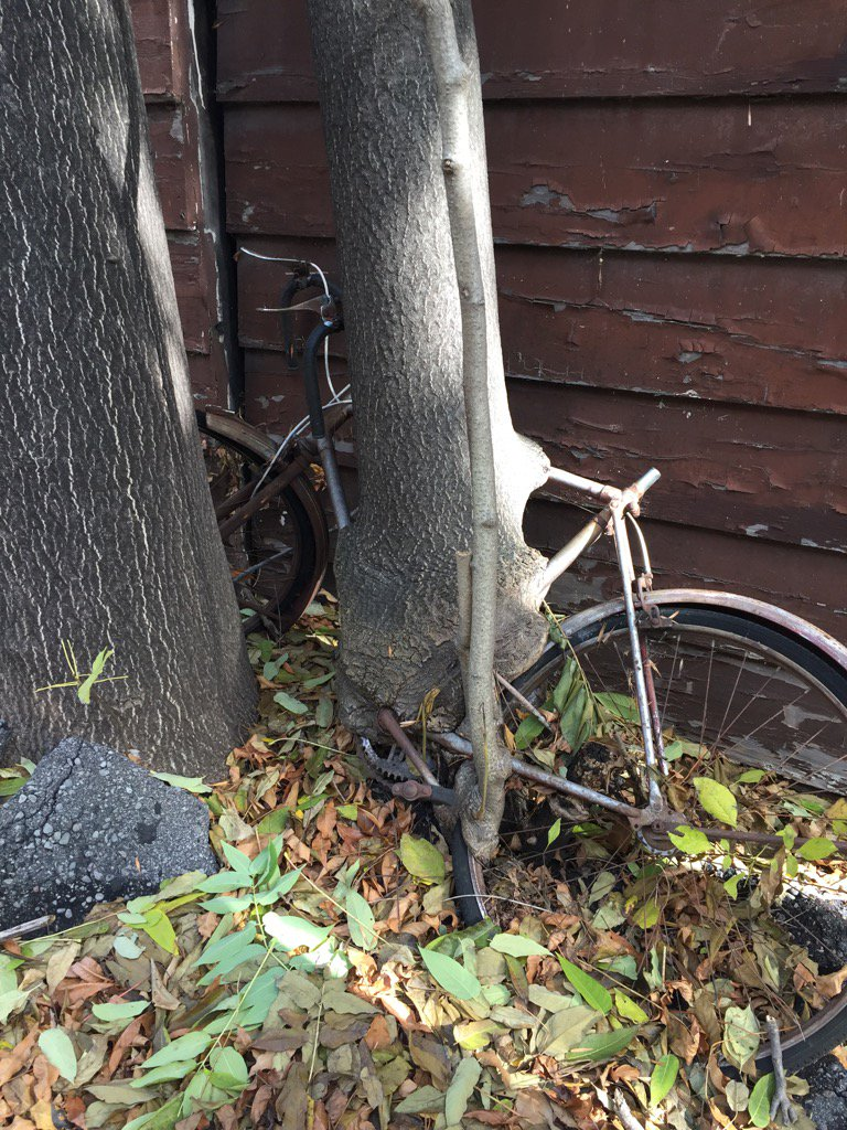 Maria Doyle Kennedy On Twitter Tree Grows Around Bike Https