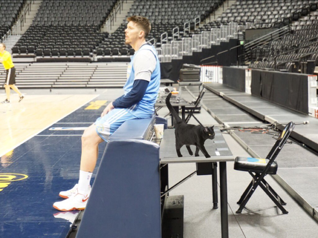 @NBAcatwatch Official Mike Miller Cat Report:  Name - Maxiumus Origin - Found in Memphis Time of Ownership - 3 years https://t.co/h2nxMFn3Y5