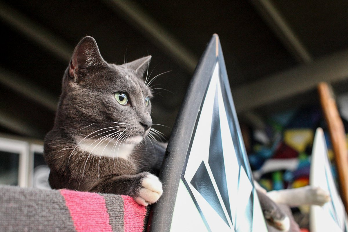 Happy #NationalCatDay to #Volcom Pipe house boss Smokey. #TruetoThis