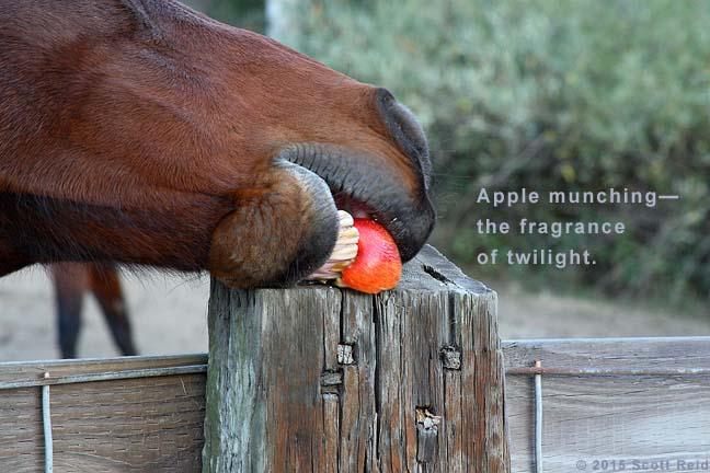 #haiku #senryu #micropoetry #haiga #sixwords ©   Apple munching— the fragrance of twilight. ~ https://t.co/j2o3BC0O9S