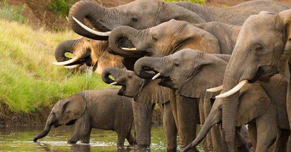 Immagini shock di elefanti uccisi e decapitati in Zimbabwe fanno il giro del Mondo