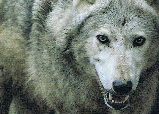 Werewolves: A Wolf Story : Ancient Legends of Ireland https://t.co/9fSpbaF3KG https://t.co/GrYBbyPukc