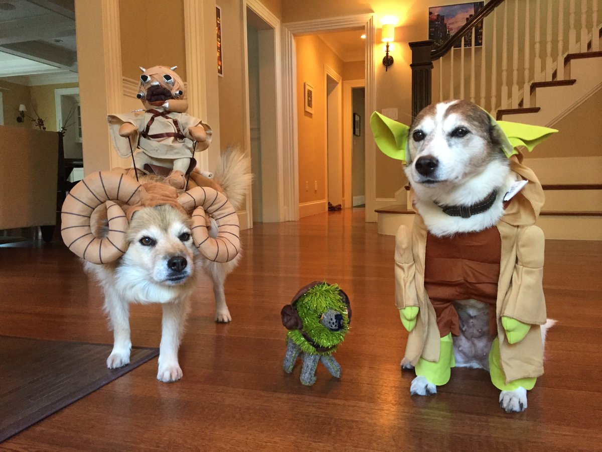 All ready for Halloween : https://t.co/ZfdondDZuO