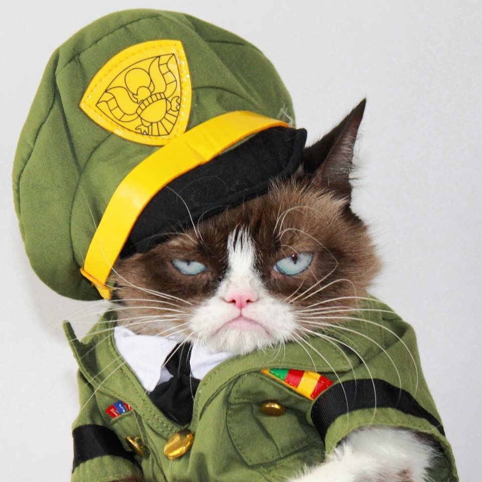 боевые котята картинки какого количества
