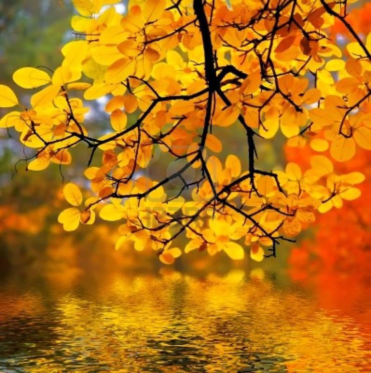 automne CSu4w1VUYAEMhlC