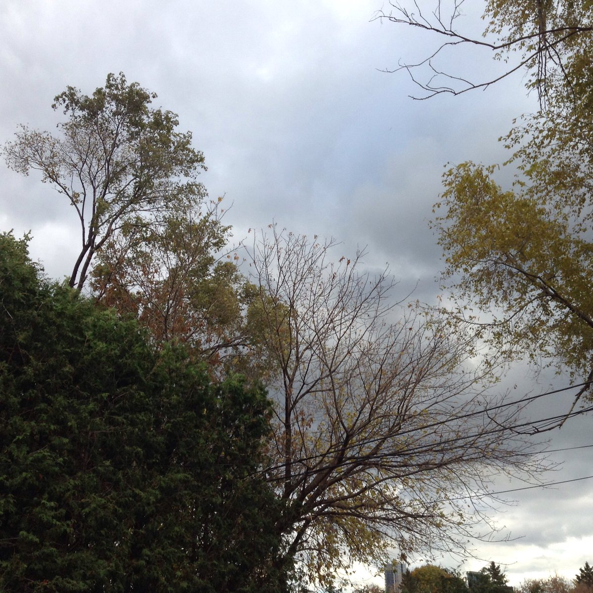 cloudy sky with fall trees in foreground
