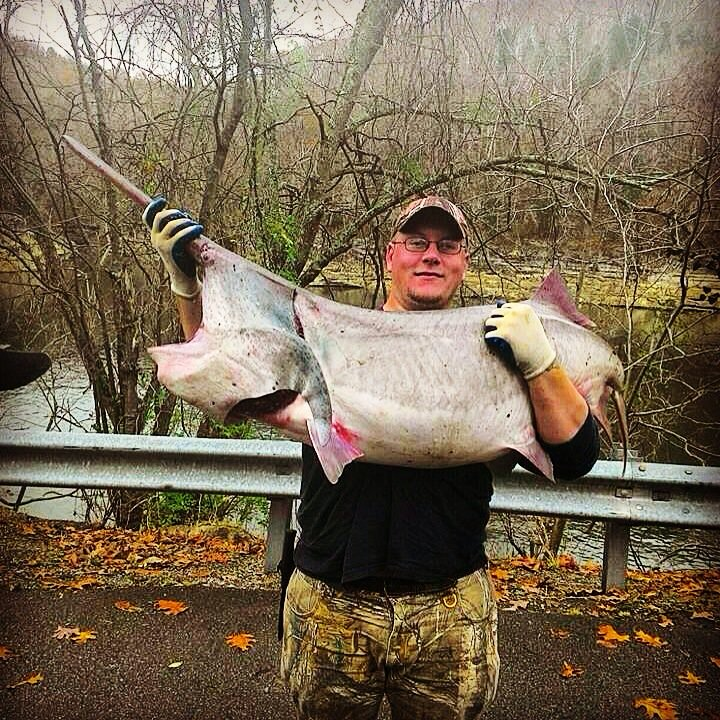 Lake cumberland ky on twitter can 39 t get over this fish for Lake cumberland fishing