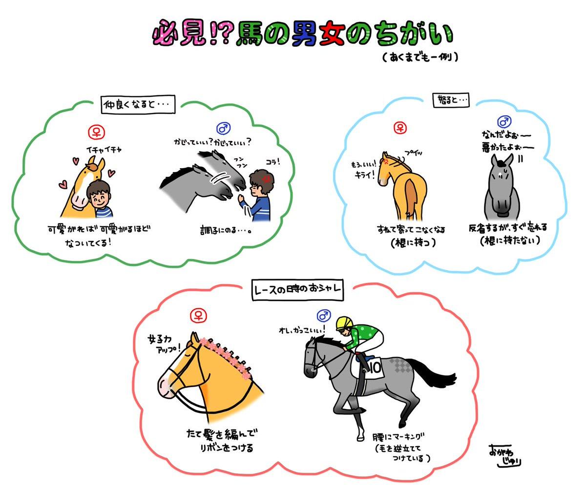 馬でも男女でこんなに違うんです。 pic.twitter.com/9ZeVwl1sHn