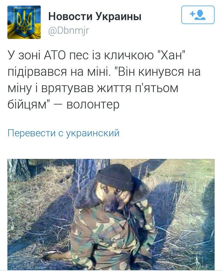 Террористы усиливают обстрелы, чтобы не отвечать за совершенные ими преступления, - спикер АТО Матюхин - Цензор.НЕТ 8539