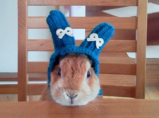 冬の帽子を編んであげた。なんだ このかわゆい生き物は。 pic.twitter.com/QrR7l1NyjH
