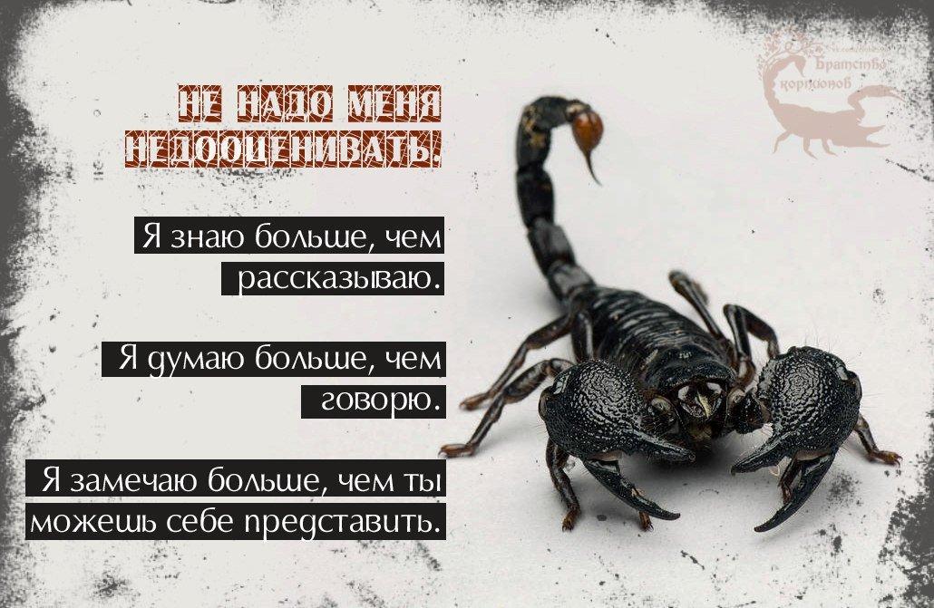Смешные картинки про скорпиона