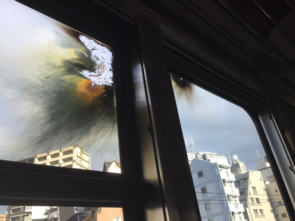 住吉で人身事故からやっと動き出したと思ったら乗車位置のちょうど真上でヤバイ爆発音。電線切れた?缶詰状態継続 pic.twitter.com/7luBGGmkZ5