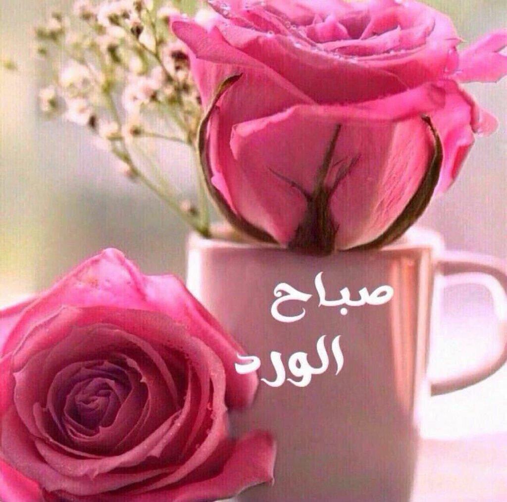 "Image: الشريف عمر ال محمود on Twitter: ""صباح ألورد. والفل والياسمين صباح ..."