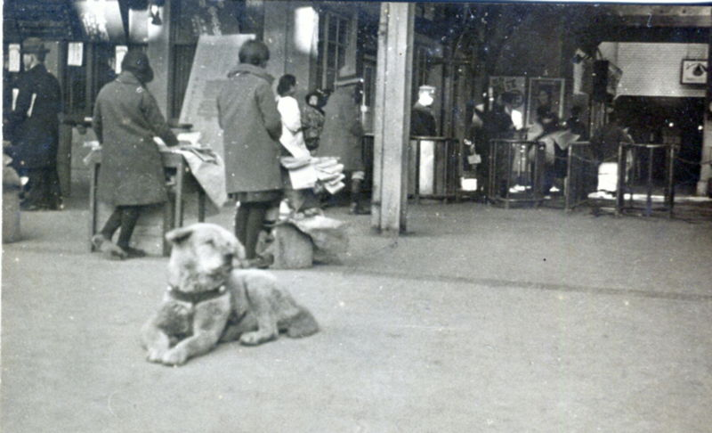 Rare photograph shows #Hachiko relaxing alone at station - The Japan News https://t.co/7CUeeFf9Xn #Akita #ハチ公 https://t.co/Ql0SFE5poO