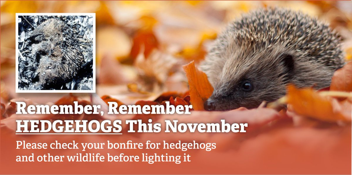 Remember, remember #hedgehogs this November. Please check your bonfire for hogs & other wildlife before lighting it. https://t.co/xYi1u8YoYH