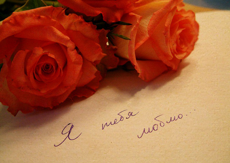 Для подруги, картинка розы с надписью я люблю тебя