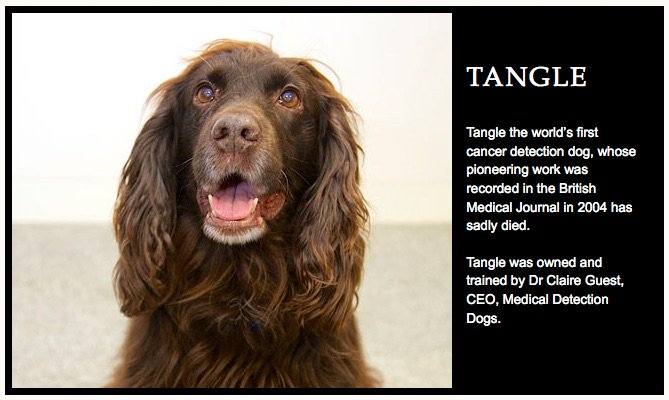It's with a very heavy heart that we share some very sad news about Tangle, R.I.P. https://t.co/S8ZBiejlgU