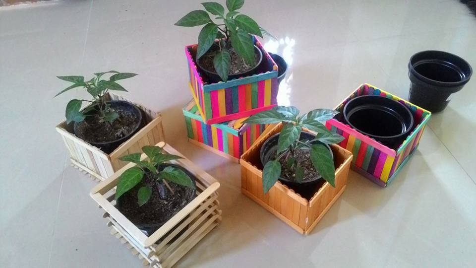 Herbs Souvenir On Twitter Cabai Hitam Dan Kaktus Mini