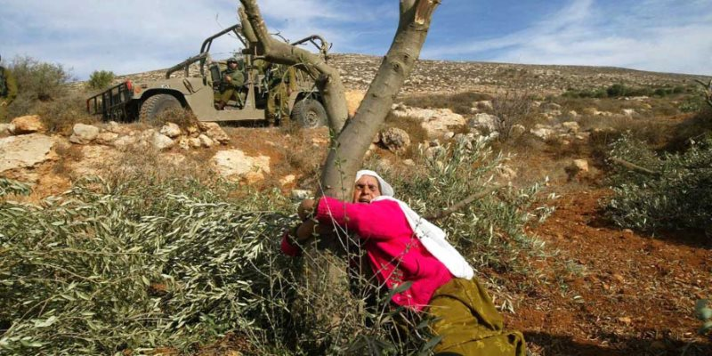 Destruction of Palestinian olive trees is a monstrous crime. The Ecologist https://t.co/y3HddHFvyo https://t.co/XzrMzhYO5J