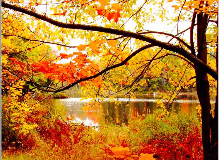 I raise my hands in gratitude    For the beauty and peace of nature    ~Barb #Gratitude https://t.co/68QwfcxzNO