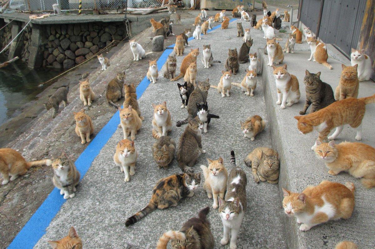 ネコちゃん もう一回 集合写真を撮るよ!青島のネコ 総出演!2015年11月7日#青島猫 pic.twitter.com/eVKHvuVuNx