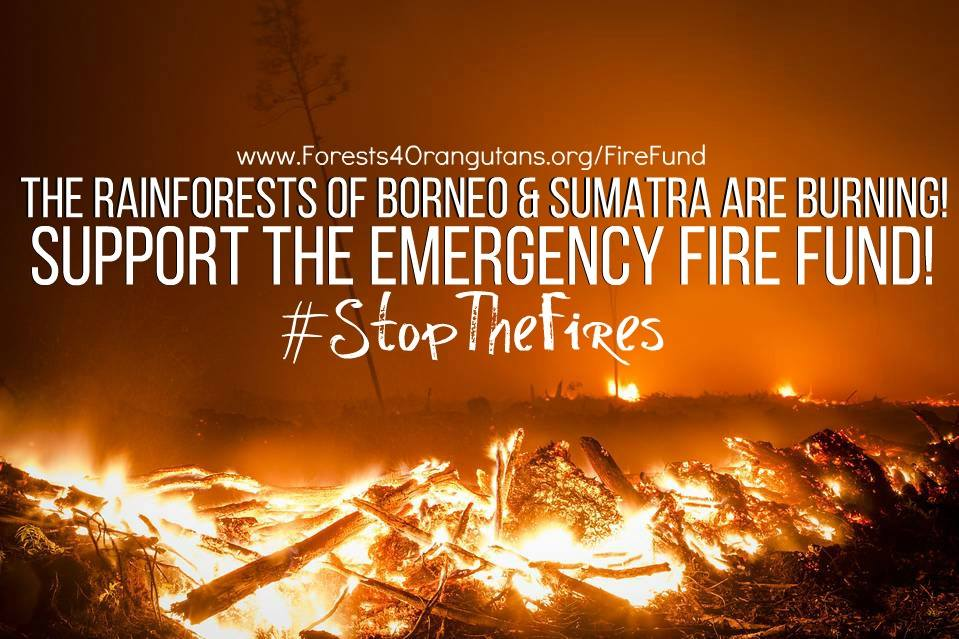 EMERGENCY APPEAL: Fire-fighting Fund https://t.co/nzLo8SALuW #StopTheFires #SaveOrangutans https://t.co/ViFbJ1SRG1