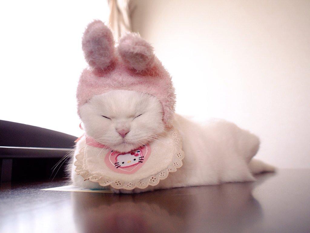 ウサギさん、寝てると亀に追い抜かれますよ。 pic.twitter.com/1sB0GmHAO0