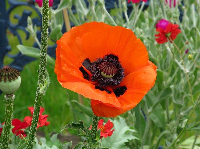 nowtiss bord .. we wil av memry mundy tooday an we wil fink bowt ower red poppy https://t.co/LyWRICn05a