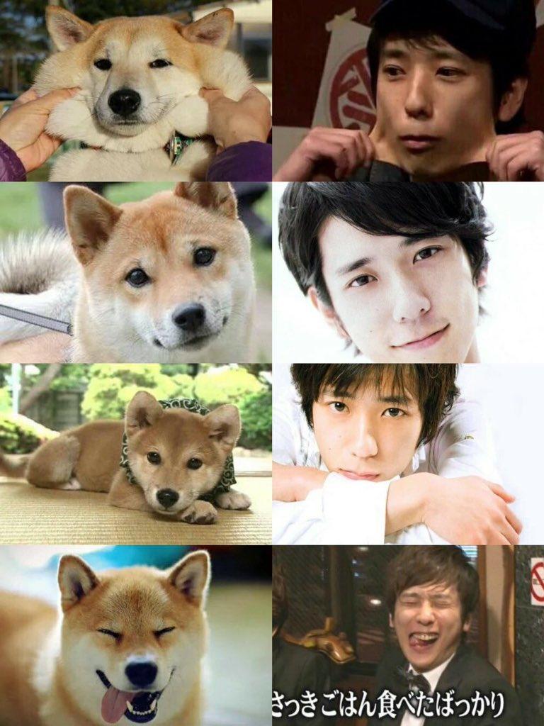 #柴犬の画像をアップすると近い構図の二宮和也の画像が送られてくる 待ってこのタグやばいwwwww ヒットしすぎ(拾)