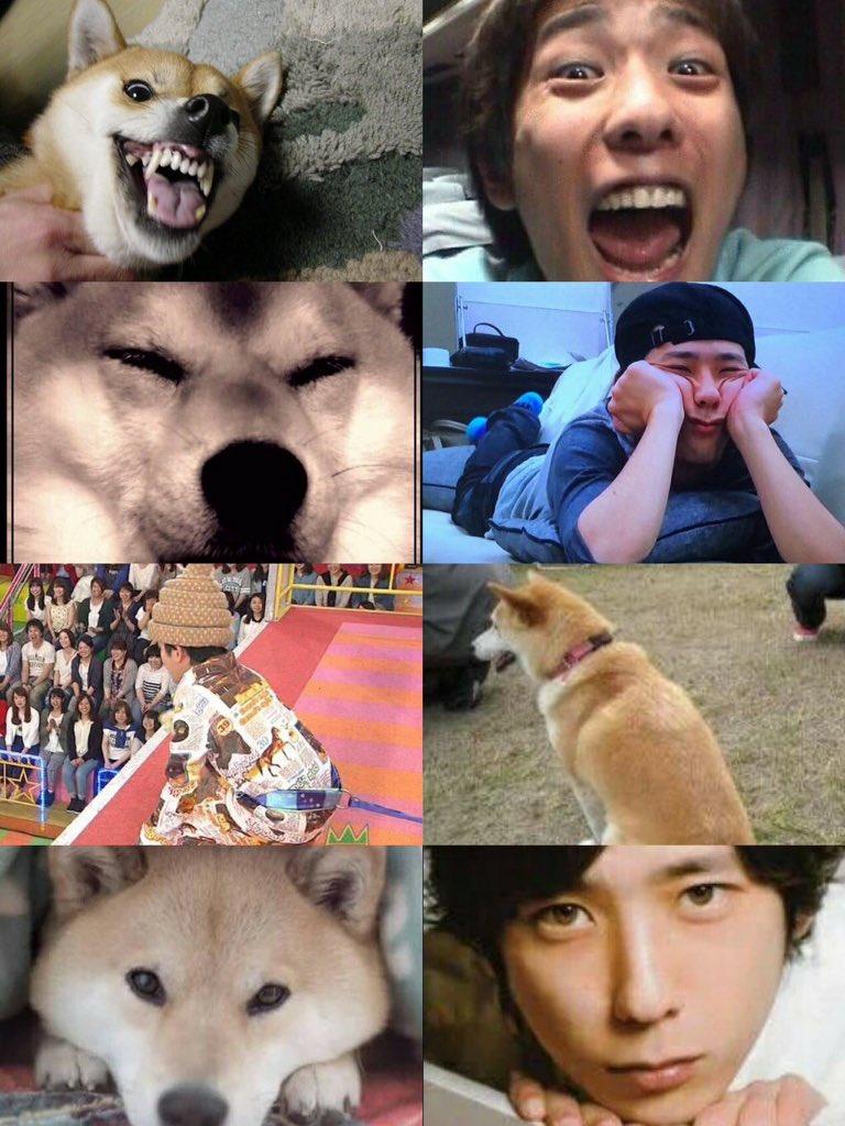 「柴犬」と「二宮和也」の親和性に着目したハッシュタグが超話題!!