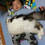 フワフワ!の猫にくるまれ、幸せそうに眠る赤ちゃんの癒し画像‼