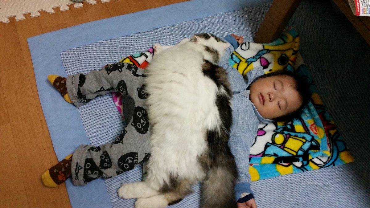フワフワwwwの猫にくるまれ、幸せそうに眠る赤ちゃんの癒し画像‼