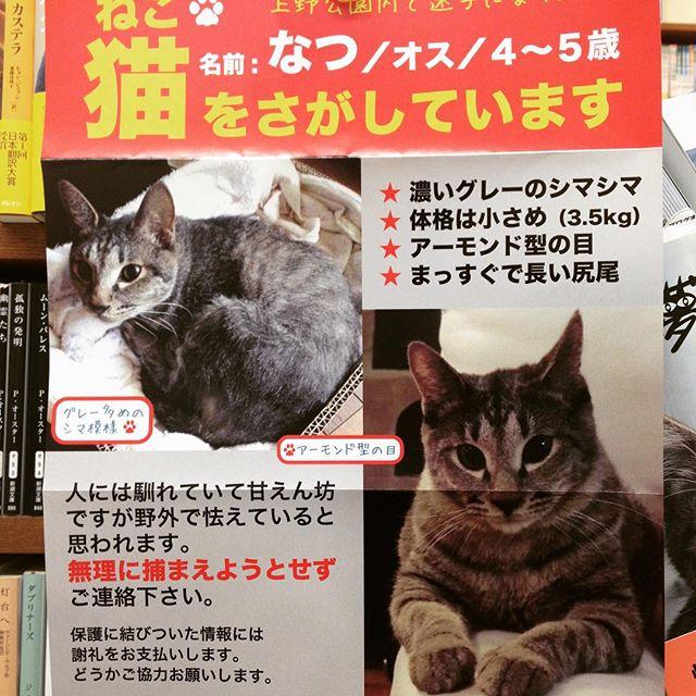 記事を公開しました。「猫本棚の横に迷い猫の貼り紙。上野公園で迷子にと。情報求む」 - https://t.co/Dw7hEMEbLb https://t.co/zKYsW3FJGZ