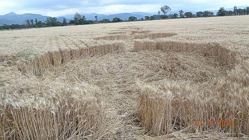Misterioso Crop Circles Alieno a Salta in Argentina