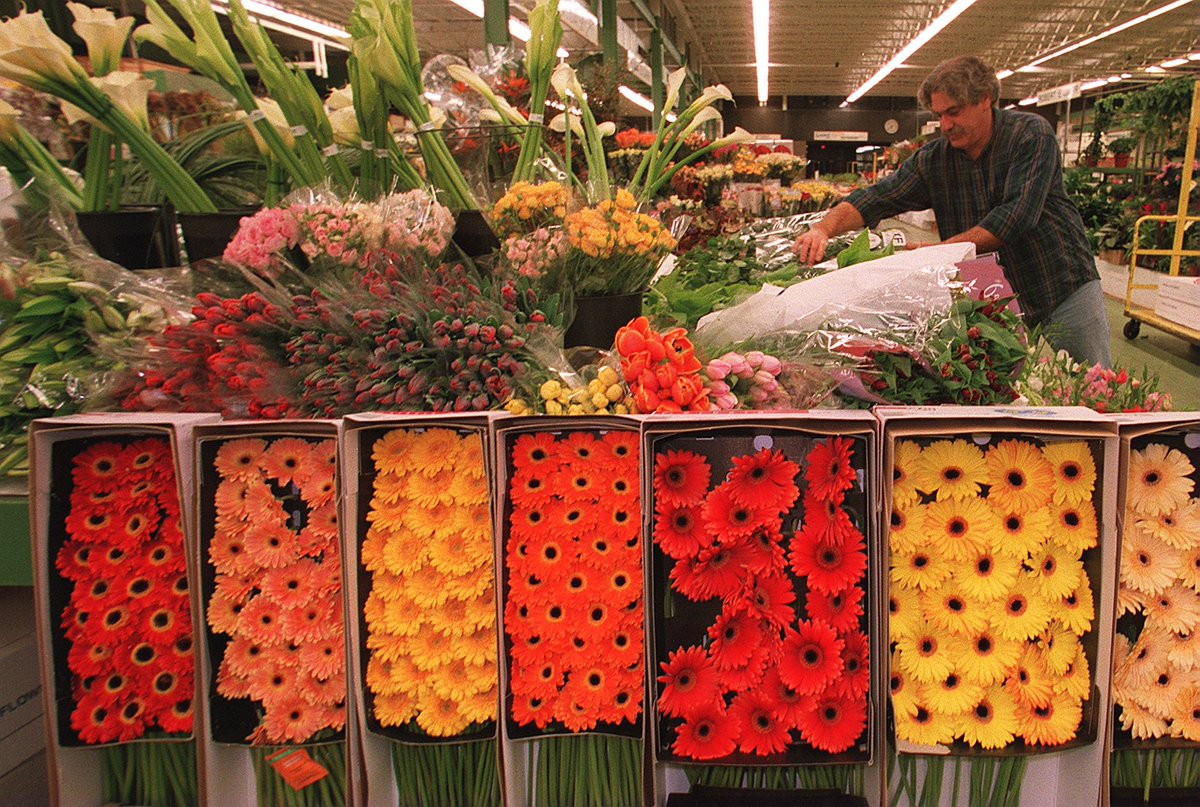 See New England S Whole Flower Market Normally Open Only To Fl Professionals Tower Hill Members 45 Nonmembers 60